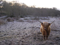 Heilan Coo at Critreoch