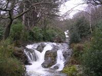 Donard Wood