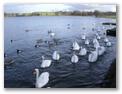 Hogganfield Loch